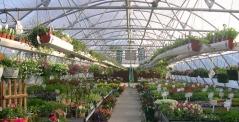 greenhouse150crop